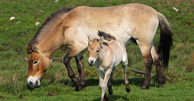 Thấy con ngựa nhỏ đi theo mình, người đàn ông dắt về đem bán, giấc mơ đêm hôm sau khiến anh ta kinh ngạc mãi không thôi - Ảnh 1.