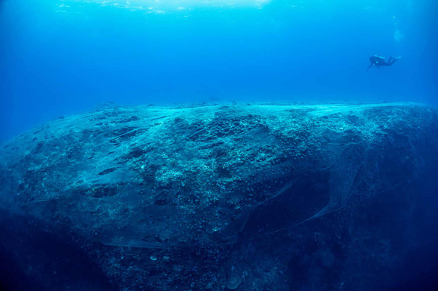 Cá mập thắt cổ, cá voi dạt bờ...: Chùm ảnh cho thấy bi kịch dưới đại dương đang trở nên đáng sợ đến mức nào - Ảnh 1.