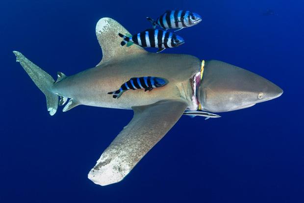 Cá mập thắt cổ, cá voi dạt bờ...: Chùm ảnh cho thấy bi kịch dưới đại dương đang trở nên đáng sợ đến mức nào - Ảnh 2.