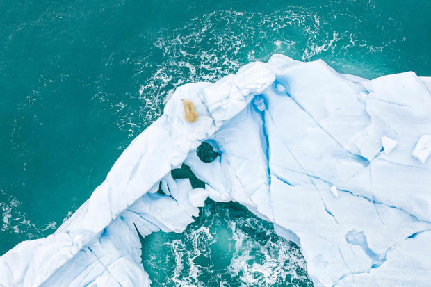 Cá mập thắt cổ, cá voi dạt bờ...: Chùm ảnh cho thấy bi kịch dưới đại dương đang trở nên đáng sợ đến mức nào - Ảnh 4.