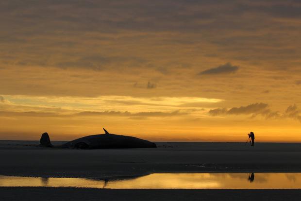 Cá mập thắt cổ, cá voi dạt bờ...: Chùm ảnh cho thấy bi kịch dưới đại dương đang trở nên đáng sợ đến mức nào - Ảnh 9.