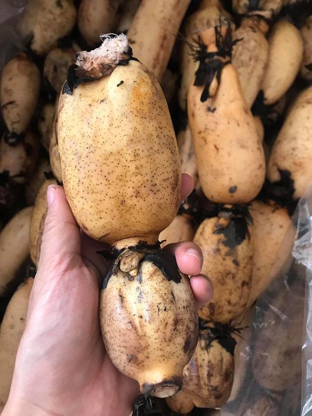 Có loại củ trồng 3 năm mới thu hoạch được, ở Việt Nam bán đầy chợ, sang Hàn Quốc lại quý như nhân sâm - Ảnh 2.
