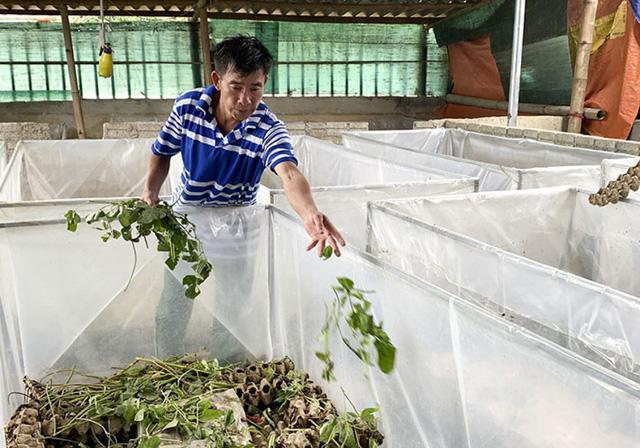 Nuôi những con nghe đã ghê mang lại nguồn thu khủng cho nông dân - Ảnh 5.