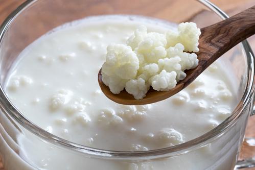 """Sự thật về loại nấm sữa chị em nô nức đem về nuôi: Có xứng danh """"tinh hoa, siêu thực phẩm? - Ảnh 2."""