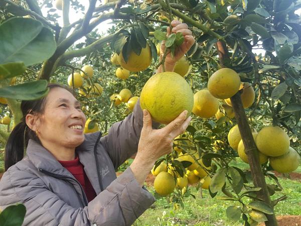 Nông dân Hà Nội trồng cây đặc sản, nuôi con đặc sản bán dễ, lời cao - Ảnh 1.