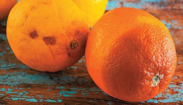 2 vợ chồng cùng lúc mắc ung thư gan không rõ lý do, bác sĩ nói thủ phạm là loại trái cây độc gấp 10 lần xyanua mà họ ăn hàng ngày - Ảnh 2.