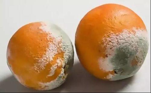 2 vợ chồng cùng lúc mắc ung thư gan không rõ lý do, bác sĩ nói thủ phạm là loại trái cây độc gấp 10 lần xyanua mà họ ăn hàng ngày - Ảnh 3.