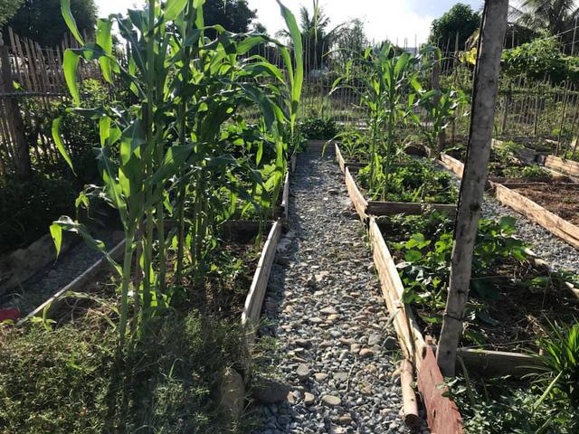 Rời Hà Nội mua 5000m² đất ở Ninh Thuận, cô gái 8x chỉ ra sự thật đằng sau 2 chữ an yên nhiều người nghĩ lúc về quê nuôi cá và trồng thêm rau - Ảnh 12.