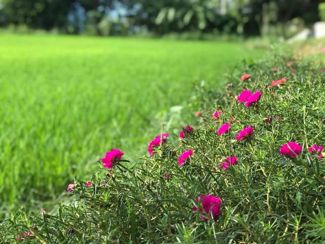 Rời Hà Nội mua 5000m² đất ở Ninh Thuận, cô gái 8x chỉ ra sự thật đằng sau 2 chữ an yên nhiều người nghĩ lúc về quê nuôi cá và trồng thêm rau - Ảnh 14.