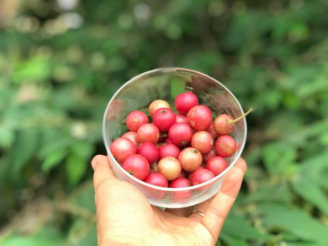 Rời Hà Nội mua 5000m² đất ở Ninh Thuận, cô gái 8x chỉ ra sự thật đằng sau 2 chữ an yên nhiều người nghĩ lúc về quê nuôi cá và trồng thêm rau - Ảnh 7.