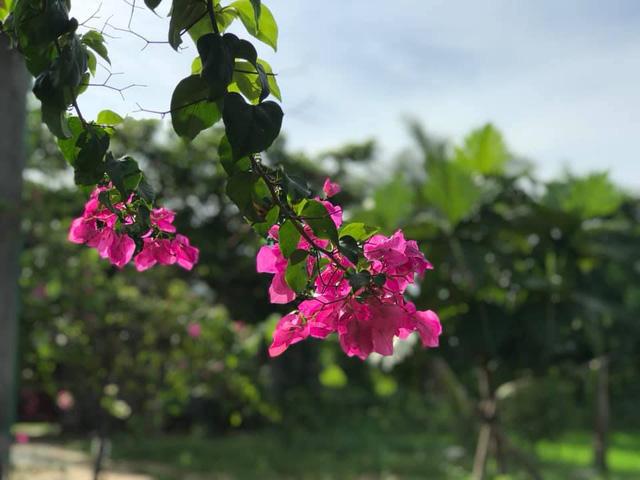 Rời Hà Nội mua 5000m² đất ở Ninh Thuận, cô gái 8x chỉ ra sự thật đằng sau 2 chữ an yên nhiều người nghĩ lúc về quê nuôi cá và trồng thêm rau - Ảnh 8.