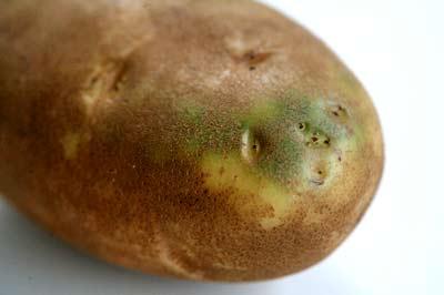 Nhìn vào củ khoai tây, cà chua, hành tây mà thấy có dấu hiệu này thì nên cho vào thùng rác vì ăn sẽ không có dinh dưỡng mà còn dễ bị ngộ độc - Ảnh 1.