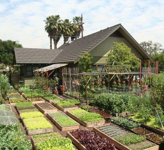 Nhà vườn dân dã nơi thôn quê, nơi mơ ước của giới nhà giàu - Ảnh 10.