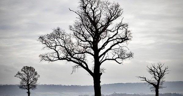 Cùng được trồng nhưng khi gặp mưa bão, cây chăm sóc nhiều hơn lại bị đổ, hỏi ra mới biết: Vạn sự trên đời muốn đứng vững phải dựa vào nỗ lực của chính mình! - Ảnh 1.
