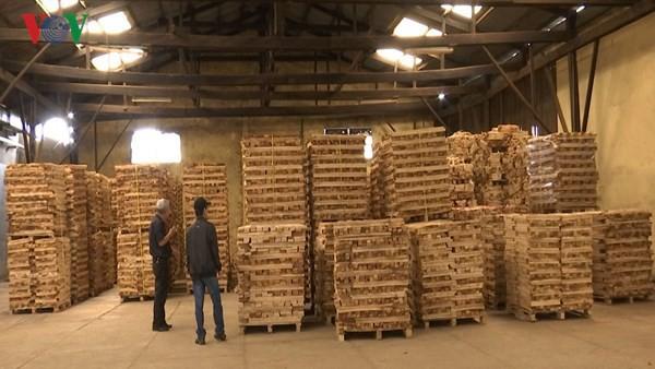 Giấy phép gỗ hợp pháp-hiện thức hóa con đường vào thị trường EU - Ảnh 1.