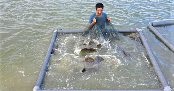 """Tôm hùm, cá mú giảm giá sốc vẫn ế, người nuôi """"méo mặt"""" bỏ nghề hàng loạt - Ảnh 1."""