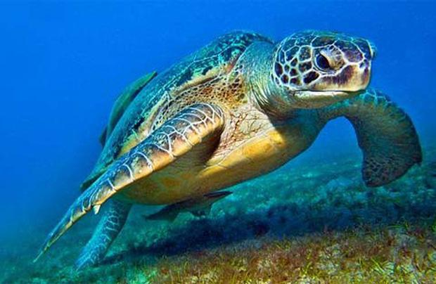 Bỏ khoản tiền lớn ra cứu 1 con rùa, vài ngày sau, người đàn ông nhận được báo đáp ngoài tưởng tượng - Ảnh 1.