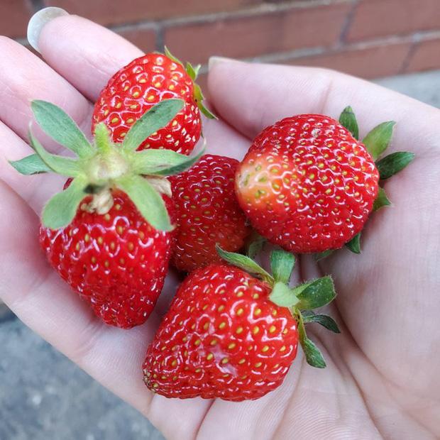 Tưởng là thứ phải bỏ đi, 7 phần thừa của các loại thực phẩm này có thể tái sử dụng như những món ăn thơm ngon - Ảnh 10.