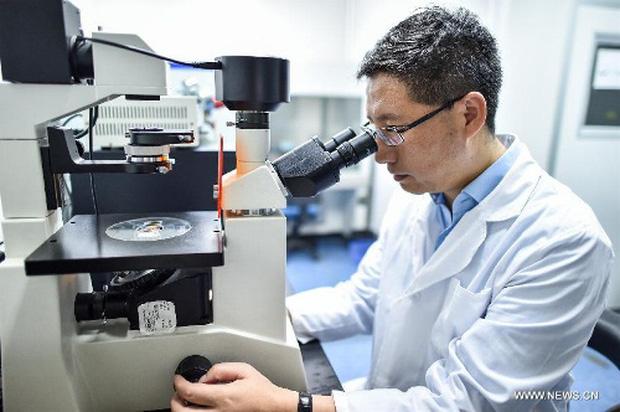 OncoMouse - Con chuột bị cấy gen ung thư một thời làm xáo trộn cả giới nghiên cứu khoa học, khiến ĐH Harvard phải mang tiếng xấu đến tận hôm nay - Ảnh 4.