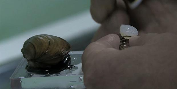 8 con trai biển quyền lực nhất Ba Lan: Có thể cắt nước sạch của hàng triệu người bất cứ lúc nào chúng muốn - Ảnh 4.