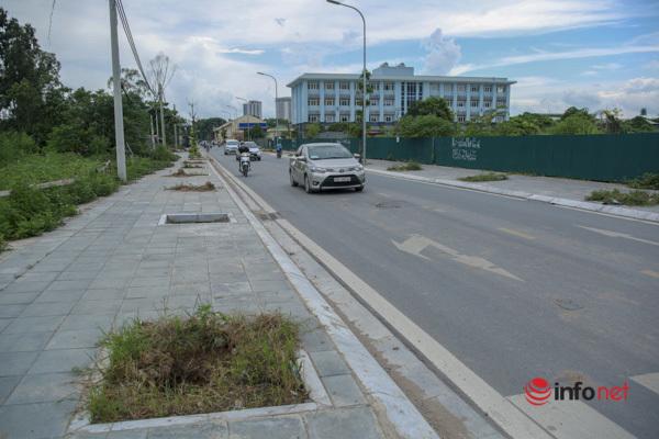 Cây chết khô, um tùm cỏ dại, rác thải bủa vây đường nối đại lộ Thăng Long - Ảnh 1.