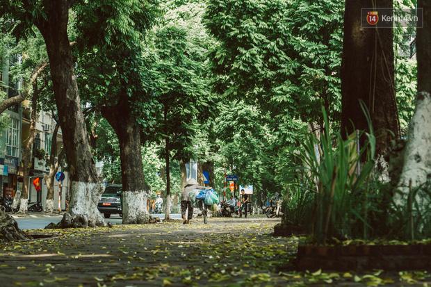 Con đường cây huyền thoại ở Hà Nội lại phủ đầy lá vàng rồi, phải chăng là mùa thu sắp về? - Ảnh 12.