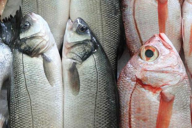Ăn thịt cá tốt cho sức khỏe nhưng có 2 loại cá là bể chứa các kim loại nặng tốt nhất không nên ăn - Ảnh 1.