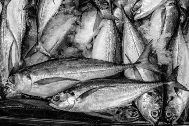 Ăn thịt cá tốt cho sức khỏe nhưng có 2 loại cá là bể chứa các kim loại nặng tốt nhất không nên ăn - Ảnh 3.