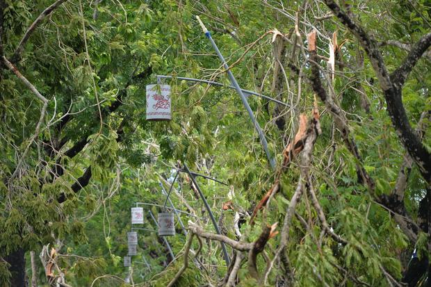 Cây ngã la liệt khiến 1 người chết và nhiều người bị thương, toàn tỉnh Thừa Thiên Huế mất điện sau khi bão số 5 đổ bộ - Ảnh 8.