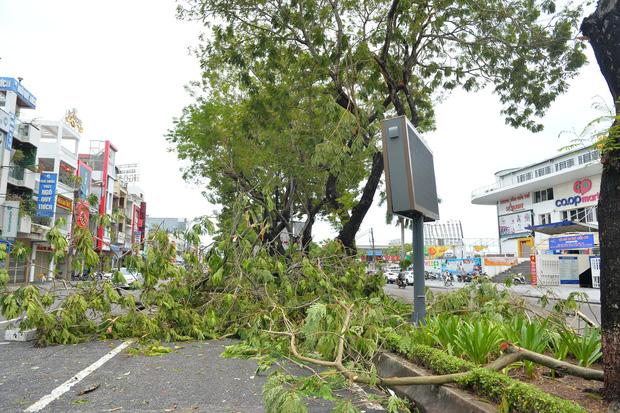 Cây ngã la liệt khiến 1 người chết và nhiều người bị thương, toàn tỉnh Thừa Thiên Huế mất điện sau khi bão số 5 đổ bộ - Ảnh 9.