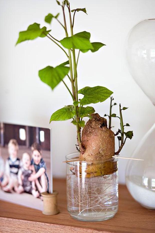 4 loại rau củ có thể chứa độc tố, gây hại cho sức khỏe nhưng nhiều gia đình vẫn ăn chúng hàng ngày - Ảnh 2.
