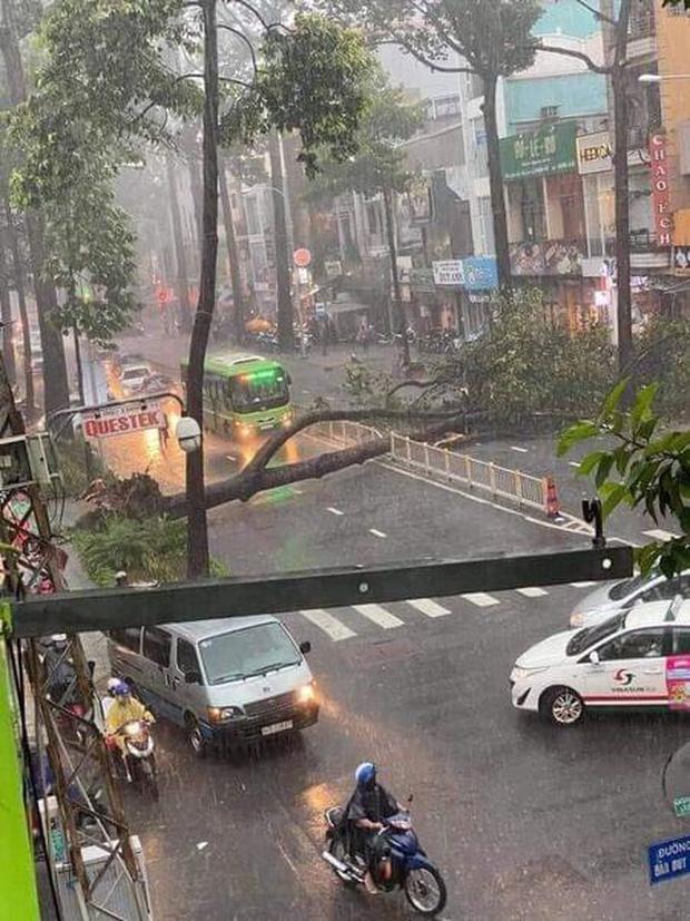 Sau vụ cây xanh bật gốc đè chết người: Vẫn còn nhiều cây đã già cỗi có rễ lộ thiên, nhánh vươn ra mặt đường ở Sài Gòn - Ảnh 1.