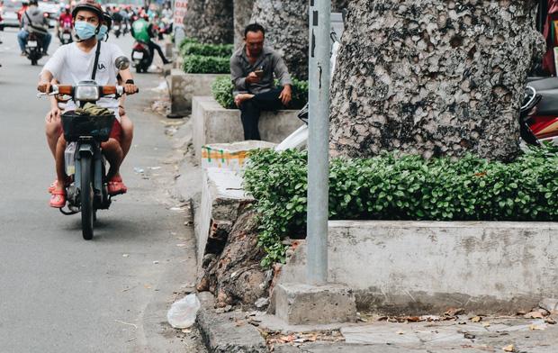 Sau vụ cây xanh bật gốc đè chết người: Vẫn còn nhiều cây đã già cỗi có rễ lộ thiên, nhánh vươn ra mặt đường ở Sài Gòn - Ảnh 15.