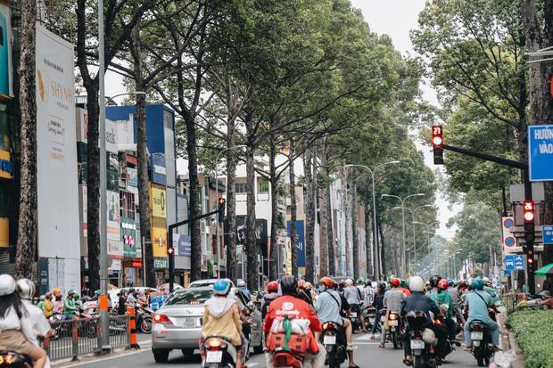 Sau vụ cây xanh bật gốc đè chết người: Vẫn còn nhiều cây đã già cỗi có rễ lộ thiên, nhánh vươn ra mặt đường ở Sài Gòn - Ảnh 18.