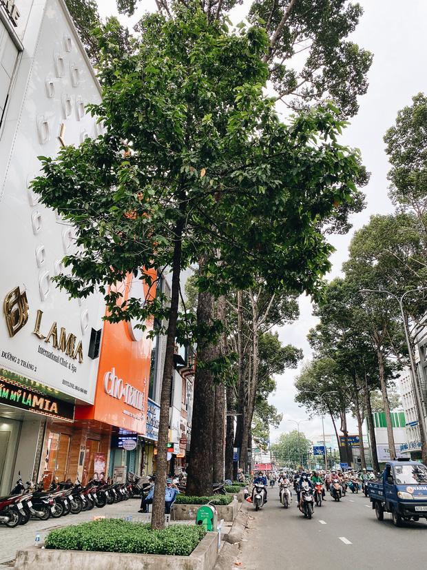 Sau vụ cây xanh bật gốc đè chết người: Vẫn còn nhiều cây đã già cỗi có rễ lộ thiên, nhánh vươn ra mặt đường ở Sài Gòn - Ảnh 19.