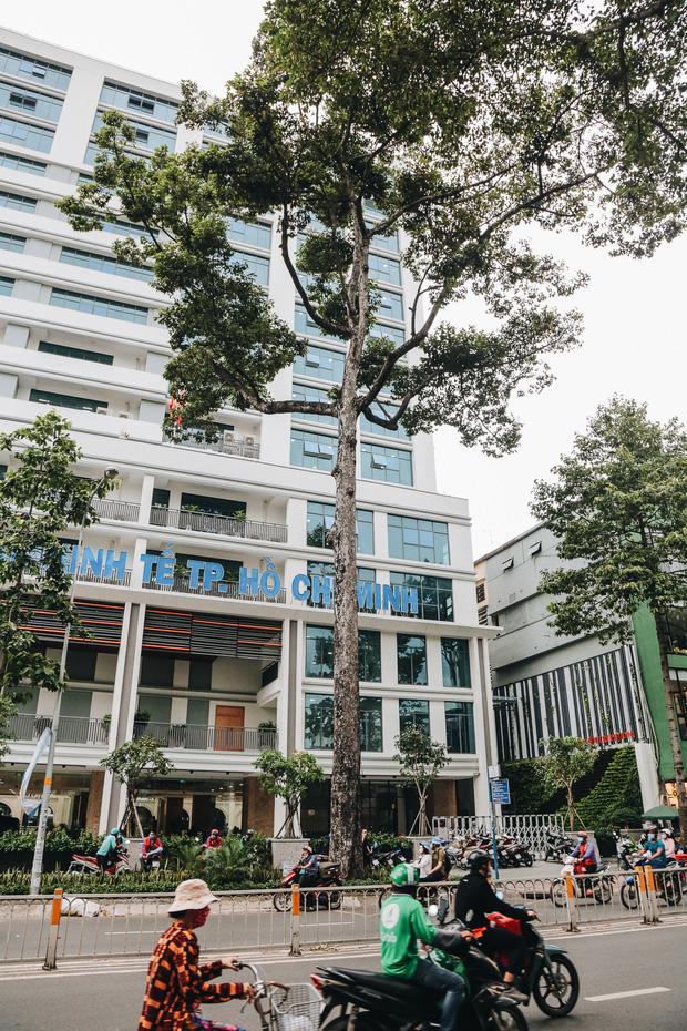 Sau vụ cây xanh bật gốc đè chết người: Vẫn còn nhiều cây đã già cỗi có rễ lộ thiên, nhánh vươn ra mặt đường ở Sài Gòn - Ảnh 5.