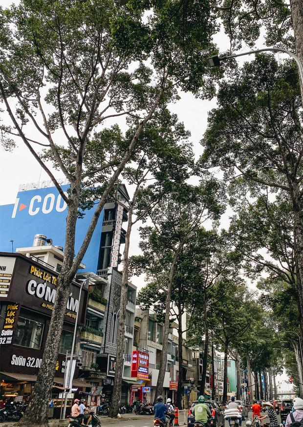 Sau vụ cây xanh bật gốc đè chết người: Vẫn còn nhiều cây đã già cỗi có rễ lộ thiên, nhánh vươn ra mặt đường ở Sài Gòn - Ảnh 8.