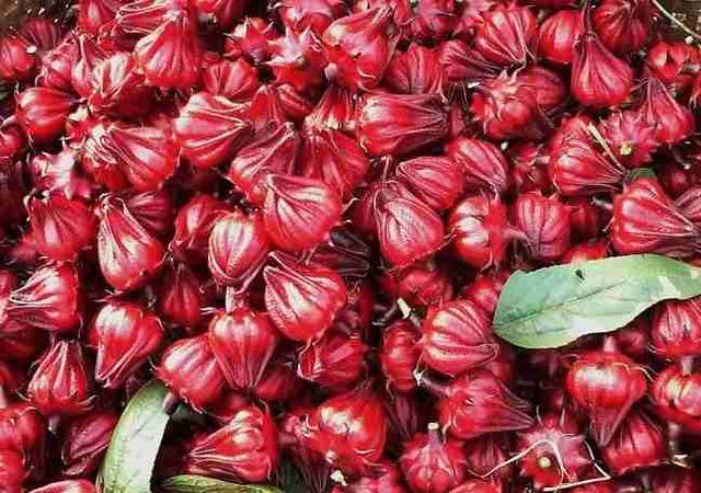 Loại thảo dược quý được ví như Atiso đỏ, giúp sạch máu, hồi sinh gan, bổ thận: Ở Việt Nam có nhiều  - Ảnh 1.