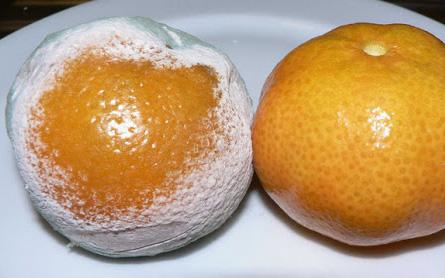 3 loại trái cây kích thích sự phát triển của ung thư mà chuyên gia cảnh báo: Loại thứ 2 người Việt hiện vẫn sử dụng rất nhiều - Ảnh 1.