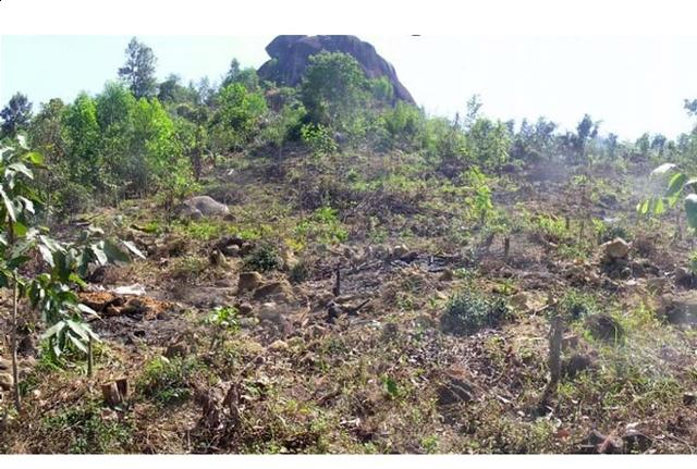 Tiến sĩ về làm nông dân: Hồi sinh đồi đá trơ trọi nhờ cỏ dại, trồng cacao không hoá chất tạo dòng socola đắt nhất Việt Nam - Ảnh 2.