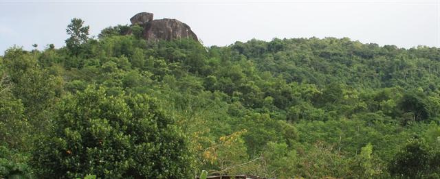 Tiến sĩ về làm nông dân: Hồi sinh đồi đá trơ trọi nhờ cỏ dại, trồng cacao không hoá chất tạo dòng socola đắt nhất Việt Nam - Ảnh 7.
