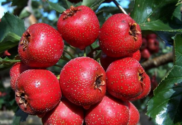 7 loại thực phẩm không nên ăn khi bụng đói nếu không sẽ rước bệnh tật vào người - Ảnh 3.