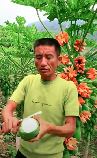 Lão nông khoe cây đu đủ kỳ quái trái bung nở như hoa thu hút 2,6 triệu lượt xem, dân mạng rình mò phát hiện sự thật không cãi được - Ảnh 6.