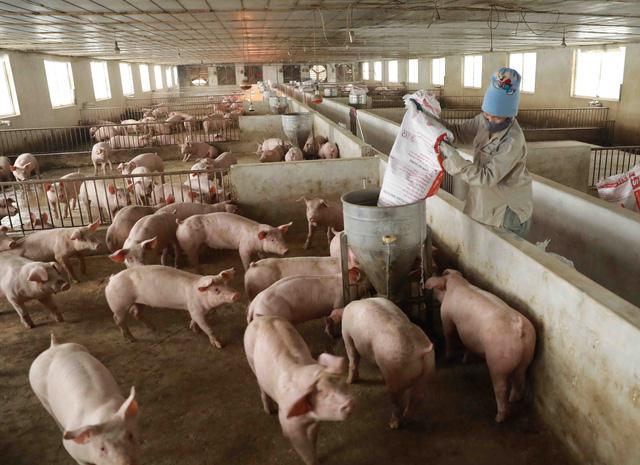 Giá lợn hơi chạm đáy, thịt lợn ở chợ và siêu thị vẫn đứng im - Ảnh 1.