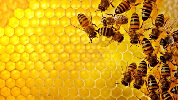 Không phải mật ong, đây mới là thứ được lấy ra từ tổ ong vừa giúp trị bệnh lại làm đẹp vô cùng hiệu quả mà nhiều người không hay biết - Ảnh 4.