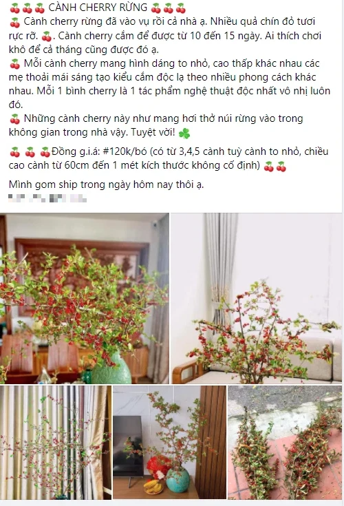 Rộ cơn sốt cắm cành cherry rừng, giá chỉ 120k/bó, hàng về đến đâu hết đến đó - Ảnh 2.