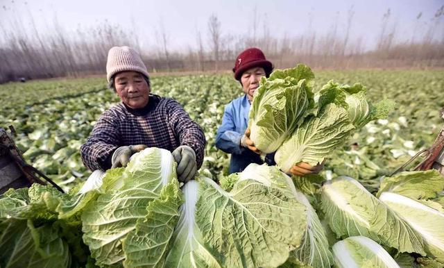 Đi mua rau cải tốt nhất đừng chọn 4 loại bất thường này vì có thể chứa formaldehyde, người trồng rau còn sợ không dám ăn - Ảnh 1.