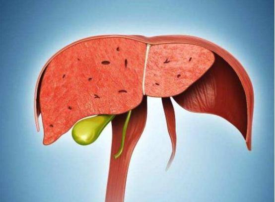 3 món ngọt hại gan nên ăn ít, 2 món đắng bổ gan nên ăn thật nhiều: Bí quyết phòng ung thư đơn giản nhưng cam đoan bạn chưa biết - Ảnh 1.