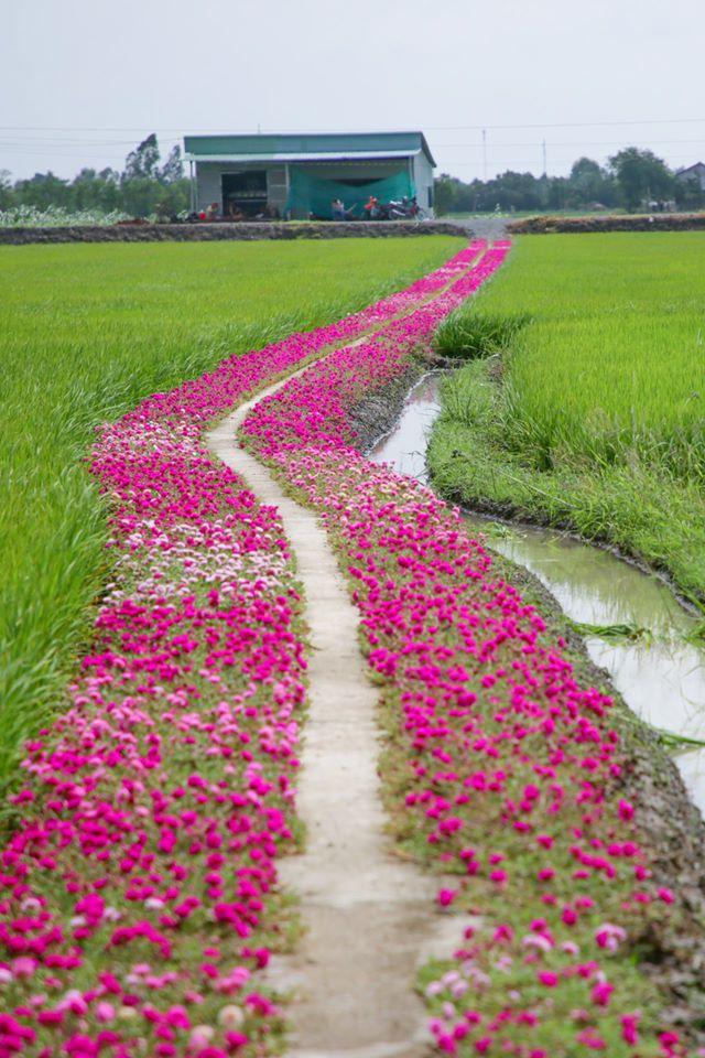 Mẩu chuyện nhỏ ngày đầu năm nhất định sẽ khiến bạn cảm thấy ấm áp: Mỗi ngày gieo một hạt mầm nhỏ, cuộc sống nhất định sẽ cho bạn cả một vườn hoa - Ảnh 2.