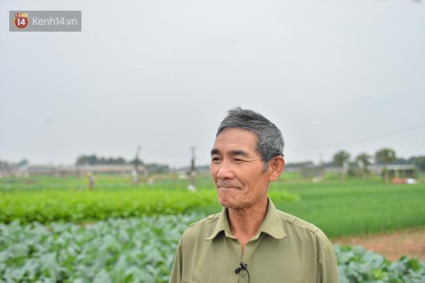 Nước mắt sau Tết: Người nông dân nhổ bỏ cải bắp, su hào vì ế không bán được - Ảnh 2.